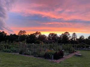 [NEWS} Nimmo Garden this week 7/13